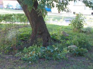 Ocieplanie i ogródek